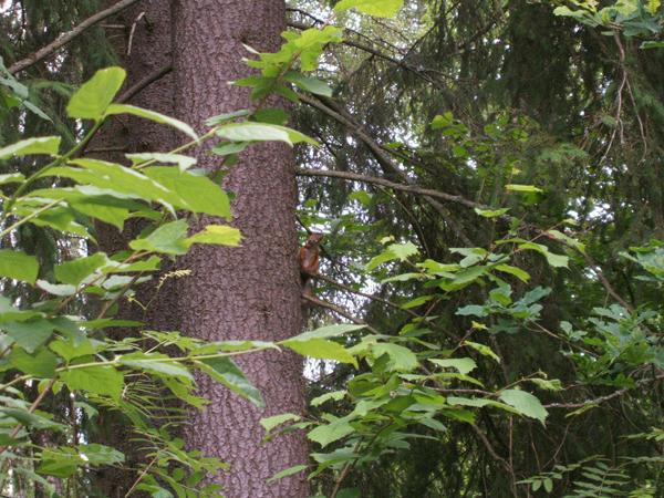 木陰でリスもお待ちしています?!