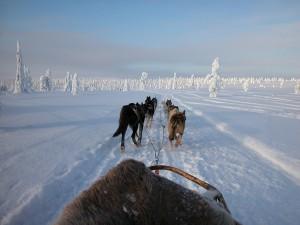 犬ゾリで冒険の旅にでかけよう