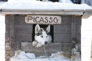 かわいいハスキー犬 photo by K.Okura