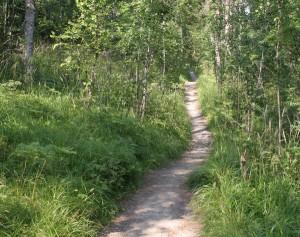 コリでのハイキングの道
