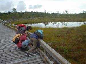 セイツェミネン国立公園の湿原