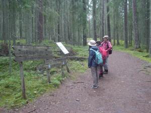 セイツェミネン国立公園の原生林